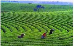 绥阳县社举办有机茶生产技术骨干培训班