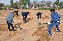 """组织开展义务植树活动为""""十个全覆盖""""添新绿"""