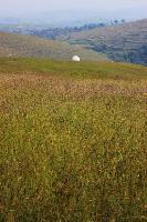 石头部落之草原风情