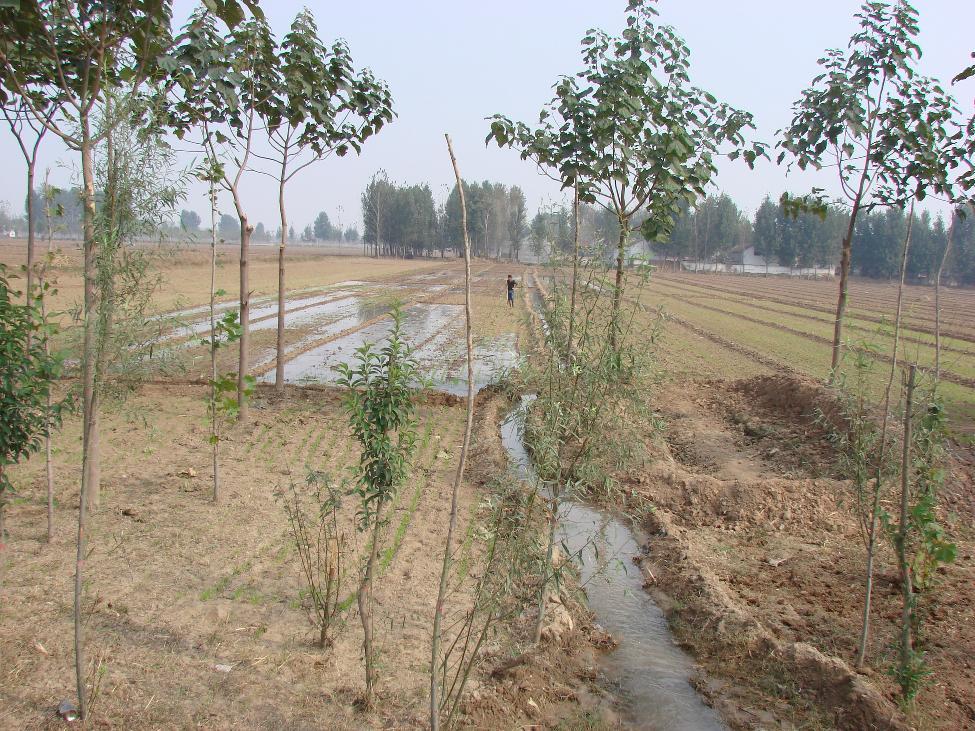 甘甜的黄河水润泽着干渴的农田