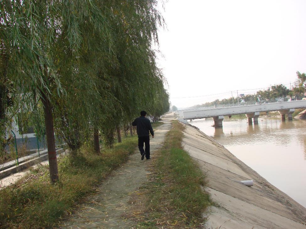 经过多年的绿化,第一濮清南总干渠沿岸已是绿树成荫