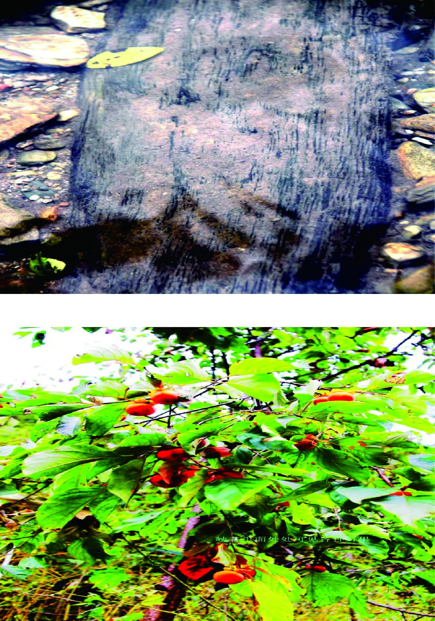 大百川省级森林公园
