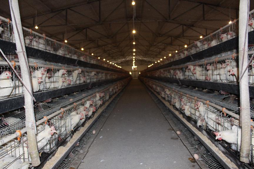 竹山县深河乡龙泉岛生态养殖专业合作社的鸡场