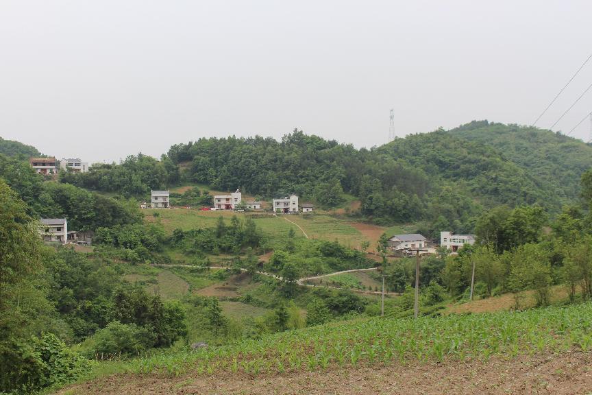 井泉村4组的通户公路