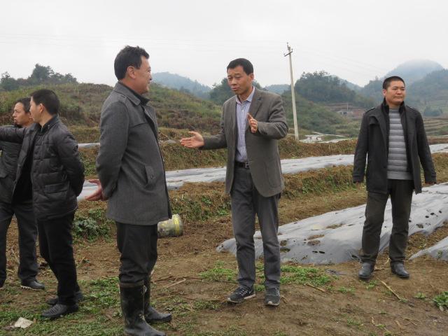 江旭东局长到花秋镇调研农业产业化发展
