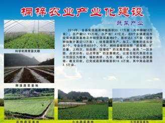 桐梓县四大产业之蔬菜产业