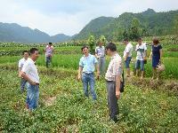 市残联周长坤副理事长调研今农蔬菜基地