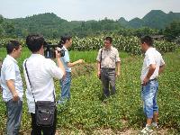 市残联周长坤副理事长调研残疾人今农蔬菜基地