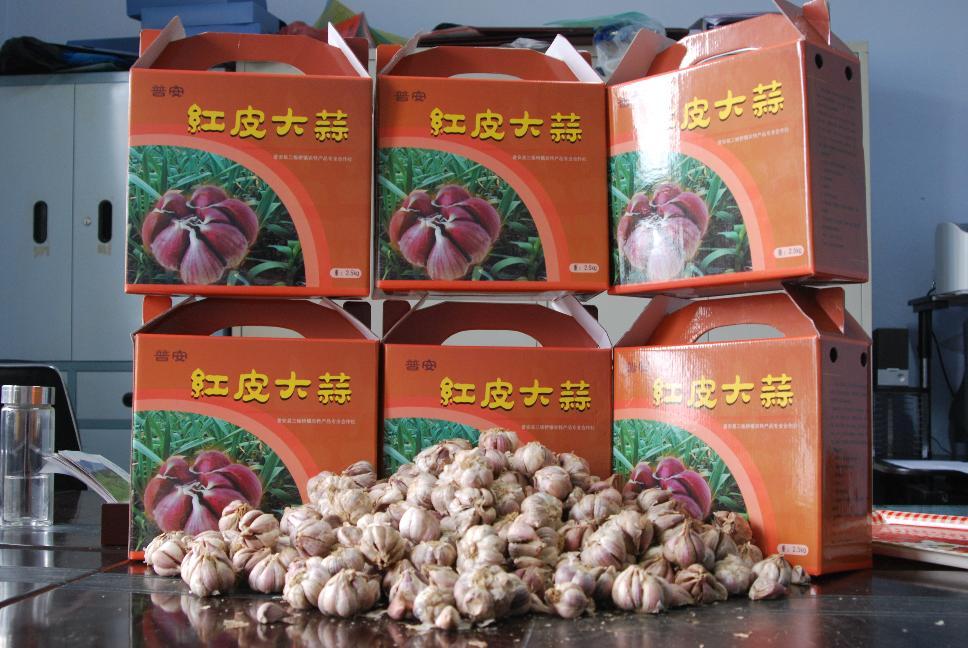 普安特产红皮大蒜