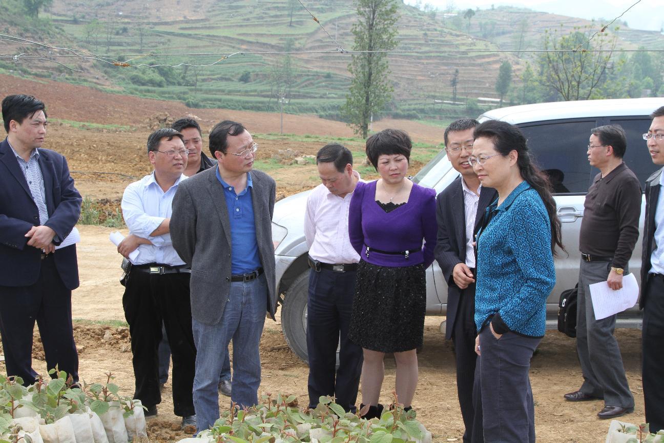 省政协副主席蔡志君等领导到大方县理化乡考察调研蜜猴桃基地