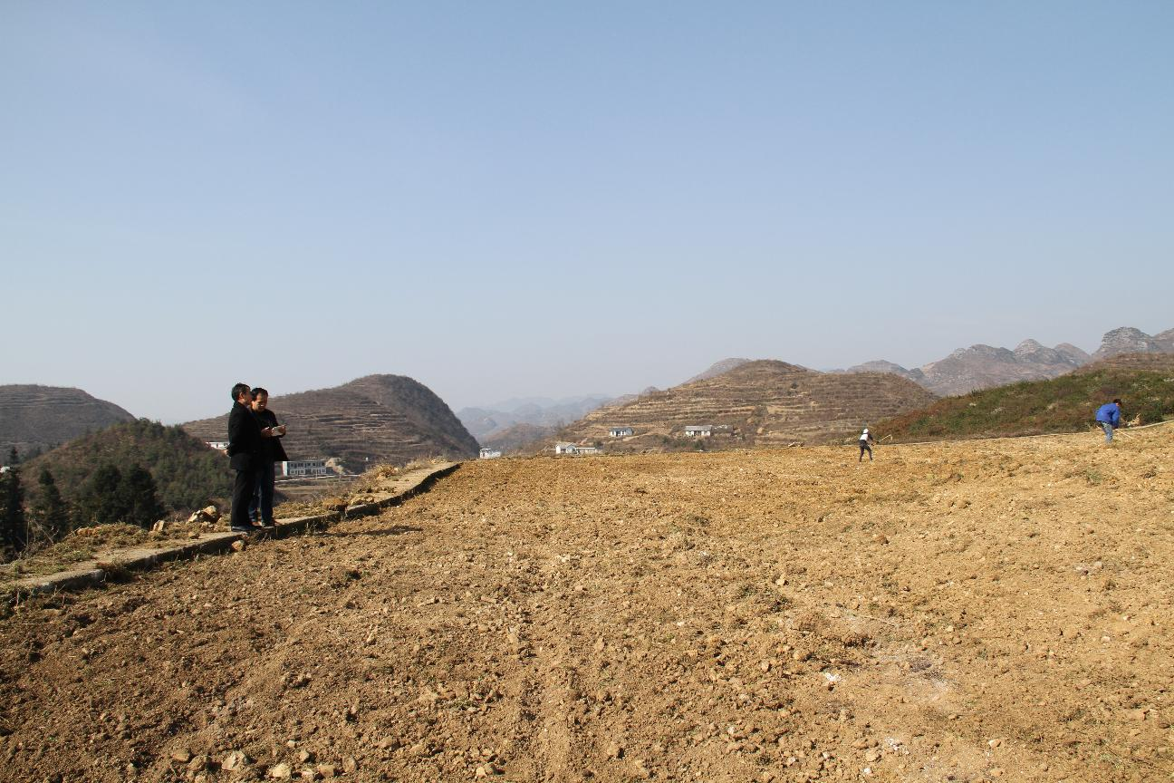 县政协陈亚林副主席到猫场镇督促了解该镇荒山造林情况