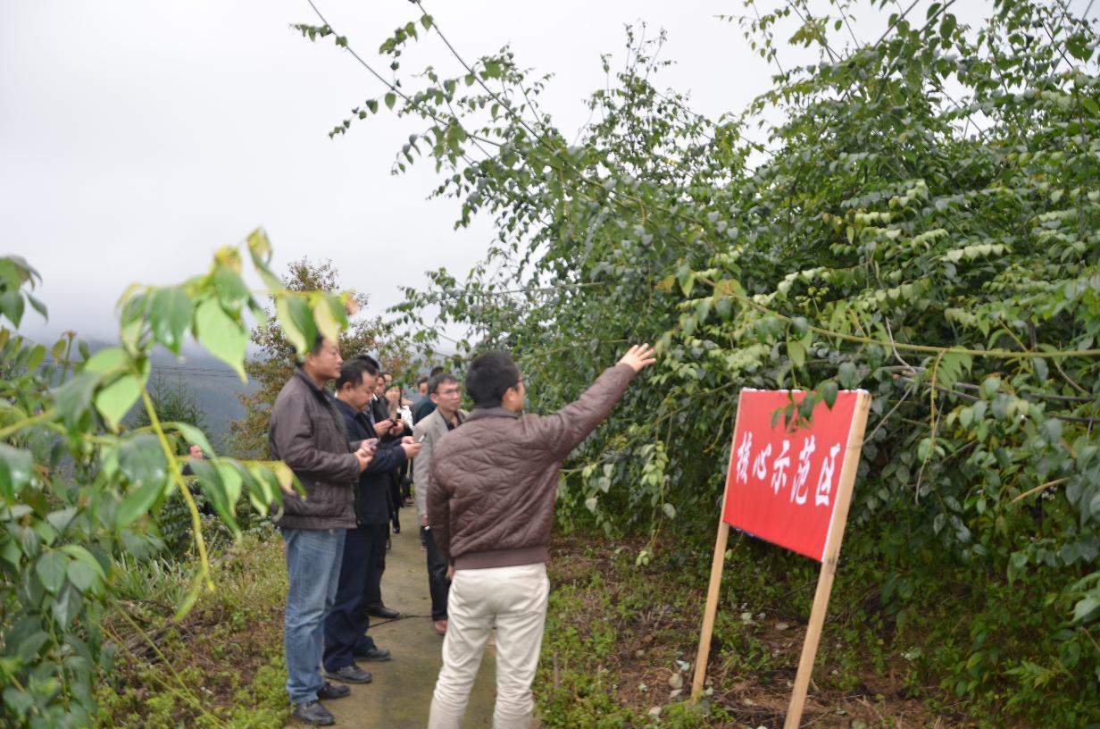 榕江县人大代表组团到剑河县考察剑河钩藤产业