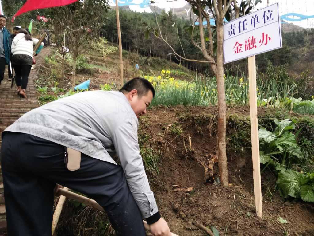 县金融办积极参加植树造林活动