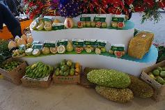 垦区特色热带果品展示