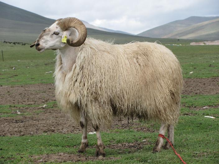 壁纸 动物 羚羊 骆驼 704_528